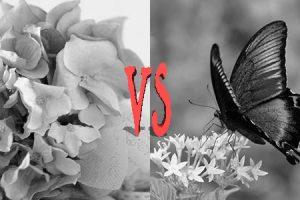 花と蝶002